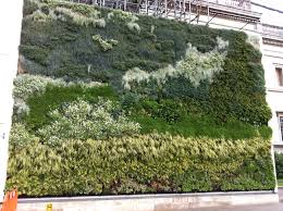Sunnyside Green Envy Deck Wash by Hedera Helix Ivy Green Screen Hedera Helix Pinterest