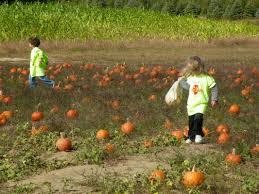 Pumpkin Patch Daycare Nj by Future Scholars Early Learning Center Future Scholars Early
