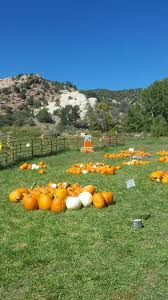 Pumpkin Patch Colorado Springs 2015 by 10 Great Pumpkin Patches In Colorado