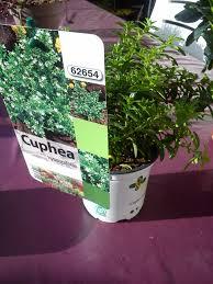 pivoine herbacee en pot pivoines herbacées balcon terrasse petit jardin en pot sur le