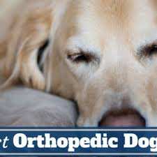 Top Rated Orthopedic Dog Beds by Orthopedic Dog Beds Archives Exotic Online Pet Store