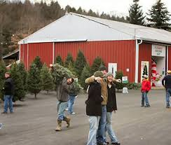 Christmas Tree Hill Shops York Pa by Best Places To Get Christmas Trees In Pittsburgh Cbs Pittsburgh