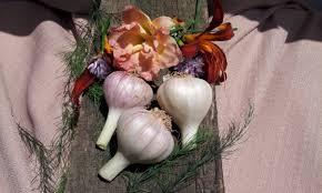 cross creek gourmet garlic garlic bulbs garlic seeds