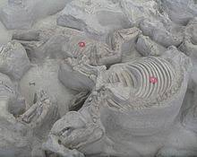 Ashfall Fossil Beds State Historical Park by Ash Hollow Formation U2013 Wikipedia