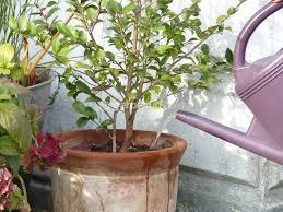 arroser le jardin et les plantes en pot en hiver les bons gestes