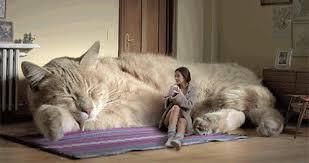 cat sofa i want a cat sofa gif on imgur