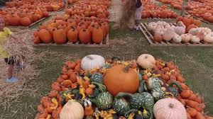 Pumpkin Patch Orlando Fl by Pumpkin Patch Church At Viera Youtube