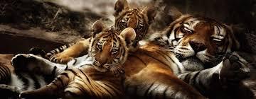 espèces présentées zoo fauverie du mont faron