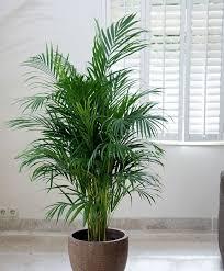 plante chambre 5 plantes à mettre dans la chambre pour passer une nuit agréable