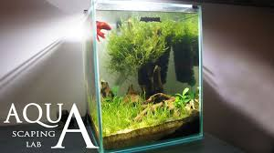 Aquascaping Lab - Tutorial Nano Cube Aquarium (size 20 X 20 X 25H ... Aquascaping Fish Tank Projects Aquadesign George Farmers Live Aquascaping Event At Crowders Ipirations Mzanita Driftwood For Inspiring Futuristic Home Planted Riddim By Alejandro Menes Aquarium Design Contest Ada Horn Wood Beautiful Natural Hardscape For Superwens 2012 Aquascape Petrified Youtube Fish Aquariums The Worlds Best Planted Aquarium Products Designs Reviews Out Of Ideas How To Draw Inspiration From Others Aquascapes 7 Wood Images On Pinterest Sculpture Lab Tutorial Nano Cube Size 20 X 25h