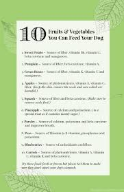 Turkey And Pumpkin For Dog Diarrhea by 134 Best Images About For Dogs On Pinterest Homemade Dog Treats
