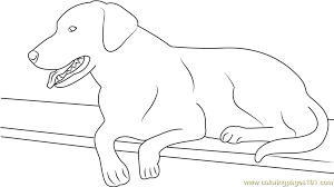 Best Dog Black Labrador Coloring Page