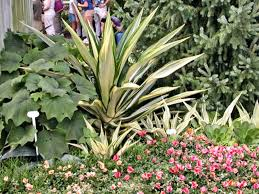 Good Plants For Bathrooms Nz by Growing New Zealand Flax Phormium