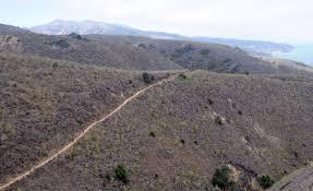 Santa Cruz Summit Christmas Tree Farm by Eastern Santa Cruz Island Scorpion Ranch Channel Islands Ca