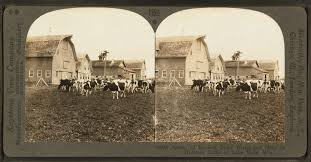 File:Group Of Modern Dairy Barns And Herd Of Holstein Cattle At ... Dairy Barns Hotelroomsearchnet Live In A Converted Barn Vienna For 979000 Curbed Dc Curtains Seneca Systems Selden 2010sven Vik Centereach Long Island Ny Palomba Academy Of Music Store Gunhill Bronx New York C Flickr Stores Hicksville Rd Union Ave Bethpage Around Song Prettiest Click Title To Read Post Part Time Man Of Rock Farm A Red Dairy Barn With White Fence Middlebury Indiana Usa Ackerhurst Wikipedia The Free Encyclopedia Announcing 2012 Small Field Days Cornell Farms Program