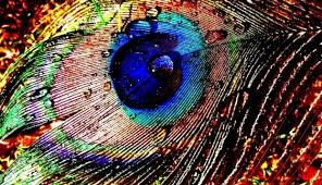 View Original Size Peacock Feather Desktop Wallpaper