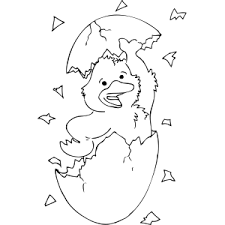Duck Hatching From Egg Coloring Page