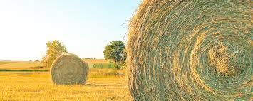 chambre d agriculture ariege bulletins fourrage chambre d agriculture de l ariege