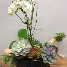Succulents Flower Delivery In Manhattan Beach