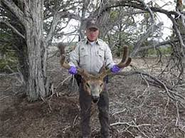 Shed Hunting Southern Utah by 6 More Giant Poaching Cases Gohunt