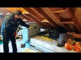 King Wildlife Solutions Removing Raccoon From Attic - YouTube Cinnamon And Pper Keep Raccoons Away Garden Pinterest What Do Raccoons In Winter Terminix How To Keep Out Of Your Dgarden To Get Rid Of House And Pests Steps With Pictures Pics Professional Raccoon Control Service Granite City Archive Stop Do You Get Rid Raccoon Eyes Referencecom Cooldesign A In Backyard Removal Your Attic Crawlspace Raccoons Video Roof Pool Yard Youtube San Antonio Texas
