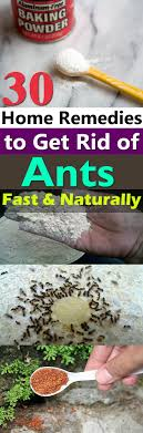 30 Natural Home Reme s To Get Rid of Ants From Home & Garden