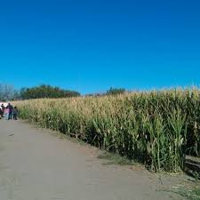 Las Cruces Pumpkin Patch Maze by Photos At Mesilla Valley Corn Maze And Pumpkin Patch U S 70