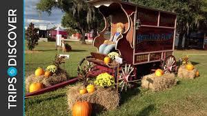 Coconut Grove Pumpkin Patch by Hunsader Farms Pumpkin Festival Is Perfect Fall Fun In Florida