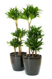plantes vertes d interieur les parasites des plantes d intérieur et leur solu
