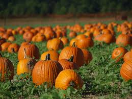 Pumpkin Patch Pittsburgh by 8 Signs That Fall Is Here