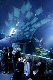 11 best sea aquarium carlsbad images on aquarium