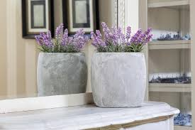 Plants In Bathroom Images by Growing Lavender Indoors Hgtv