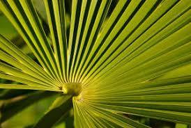 palmier d intérieur conseils pour un entretien facile