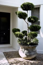 Juniperus Cloud Tree Underplanted With Gardenia Floria In Bell Pots Double