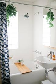 Small Plants For The Bathroom by Plants Help Clean The Air And Eliminate Bacteria Which Makes Them