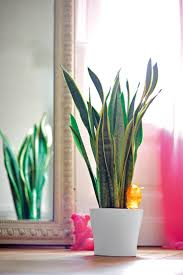 Plants For Bathroom Feng Shui by 173 Best Plantas Images On Pinterest Plants Indoor Plants And Home