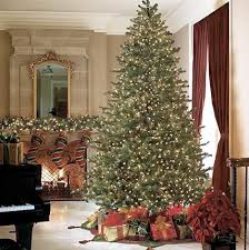Barcana Foot Noble Fir Ready Trim Christmas Tree