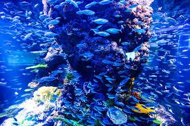 ph aquarium eau douce trucs et astuces pour démarrer aquarium d eau de mer