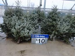 Fascinating Real Christmas Tree Prices Walmart ANY Size 10 Ship Saves
