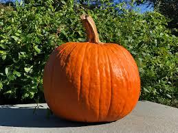 Pumpkin Picking In Ct by 2017 Pumpkin Picking Guide Greenwich Moms