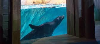 california sea exhibit window now open to the at