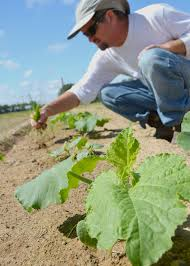 Pumpkin Patch Lawrence And Benton state truck crops have growing consumer value mississippi state