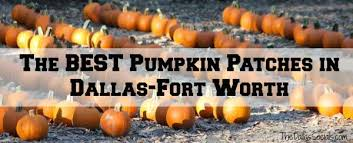 Nearest Pumpkin Patch Shop by The Best Pumpkin Patches In Dallas Fort Worth Dallas Socials