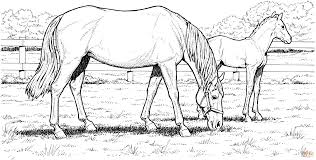 Click The Grazzing Mare Horse And Filly Coloring Pages To View Printable