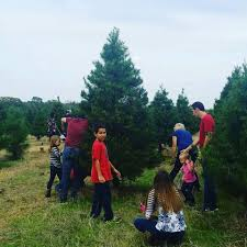 Leyland Cypress Christmas Tree by 10 Texas Christmas Tree Farms That Are Worth The Trip
