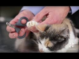 how to cut a cats nails best 25 cut cat nails ideas on