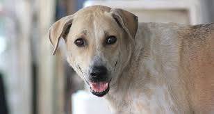 Top 10 Dogs That Dont Shed by Dogs That Don U0027t Shed Cesar U0027s Way