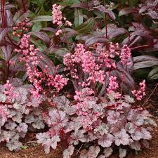 Minnesota Herbs