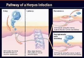 asymptomatic shedding gen h central