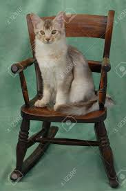 Cat On Rocking Chair